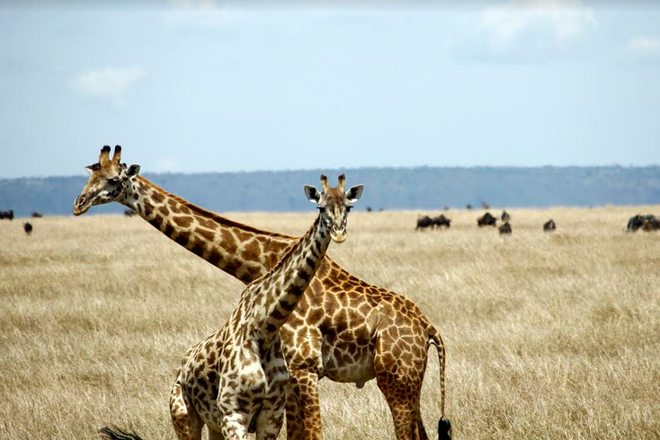 Tour gallery image